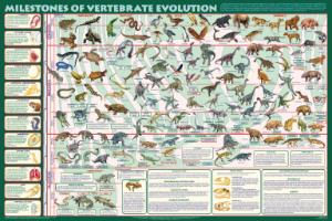 Milestones of Vertebrate Evolution Chart