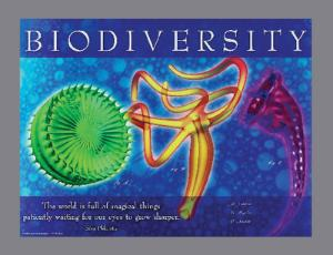 Biology Images and Ideas Posters