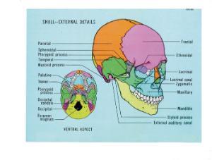 Ward's® Human Anatomy Visual Resource CD-ROM