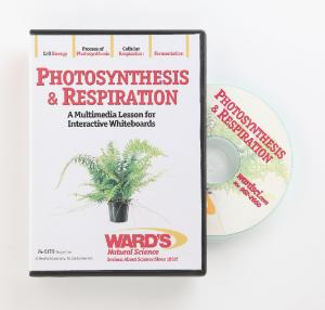 Interactive Whiteboard Science Lessons:  Photosynthesis And Respiration