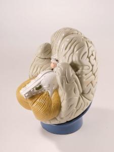 Denoyer-Geppert® Classroom Brain