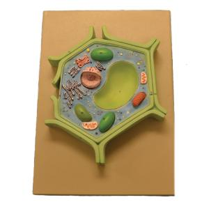Eisco® 4 Part Plant Cell