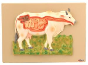 Eisco® Cow Digestive System