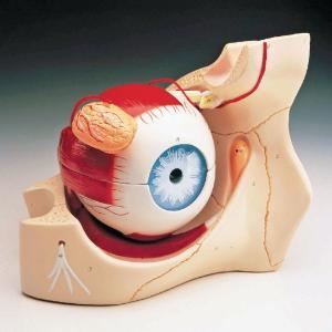 Denoyer-Geppert® Giant Eye In Orbit