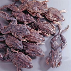 Ward's® Preserved Grassfrogs, Double Injected