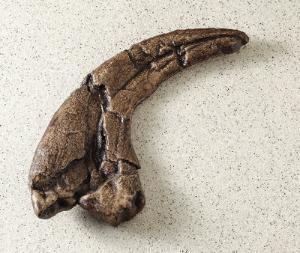 Utahraptor ostrommaysi (Cretaceous)