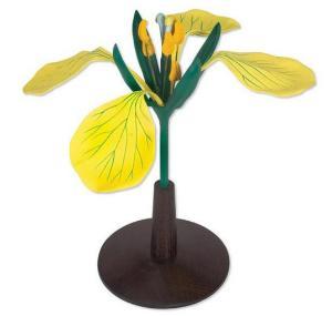 3B Scientific® Rapa Flowers