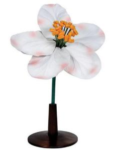3B Scientific® Floral Models