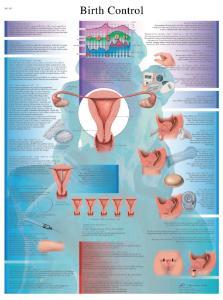 3B Scientific® Contraceptive Chart