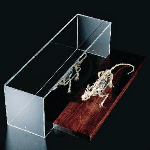 Ward's® Rat Skeleton