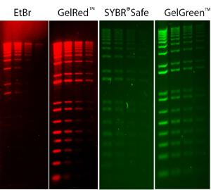 Comparison of GelRed™ with ethidium bromide (EtBr) and GelGreen™ with SYBR Safe in precast and post-electrophoresis gel staining respectively showing serial dilutions (200 ng, 100 ng, 50 ng and 25 ng from left to right)of the 1 kb Plus DNA Ladder (Invitrogen) loaded on a 1% agarose gel in TBEbuffer.