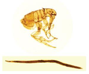 Veterinary Parasite Slide Set
