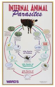 Ward's® Internal Animal Parasites Poster