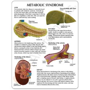 GPI Anatomicals® Metabolic Syndrome