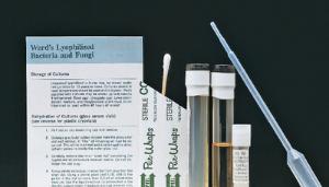 Ward's® Live<i> E. coli </i>cultures for Coliphage Use