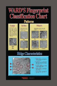 Ward's® Fingerprint Classification Chart